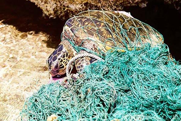 زبالههای دریایی بلای جان آبزیان شده است