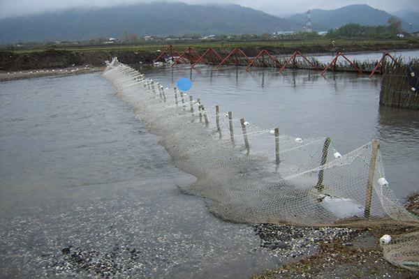 شرایط بازسازی ذخایر دریای خزر در آستارا فراهم شد