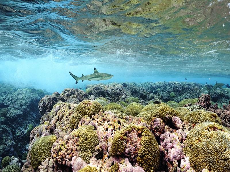 افزایش 10 درصدی مناطق تحت حفاظت اقیانوسها تا سال 2020 میلادی