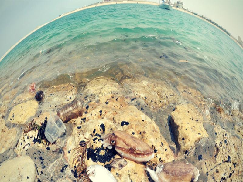 کشف دومین نشت نفتی در آبهای کویت
