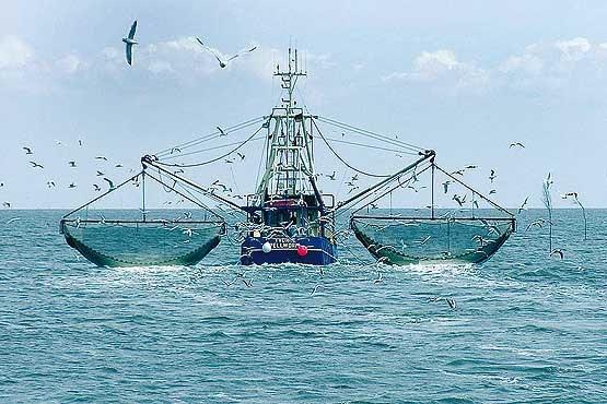 نسبت به صید ماهی «ترال کف» به شیلات تذکر دادهایم