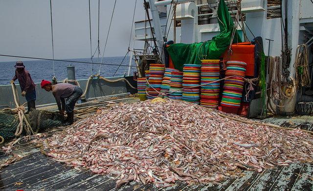 فعالیت 3000 قایق صیادی بیمجوز در دریای عمان
