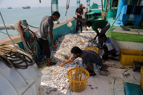 تورهای کشتیهای صنعتی؛ مانعی برای رونق صید صیادان هرمزگانی